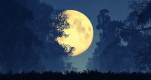 Moon Tarot Cards: Moon Symbolism 101